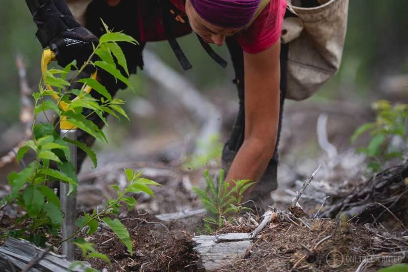 Ihr neues KRISTALL Velo pflanzt Bäume