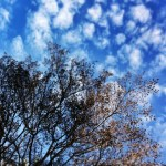 Bare tree branches in front of blue sky and small white clouds
