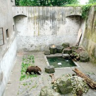 Bear in lower courtyard