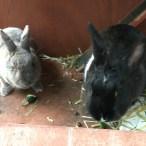 Monty & Zoë