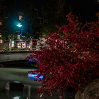 Bridge and red bush in Whistler