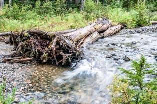 Fallen tree in river