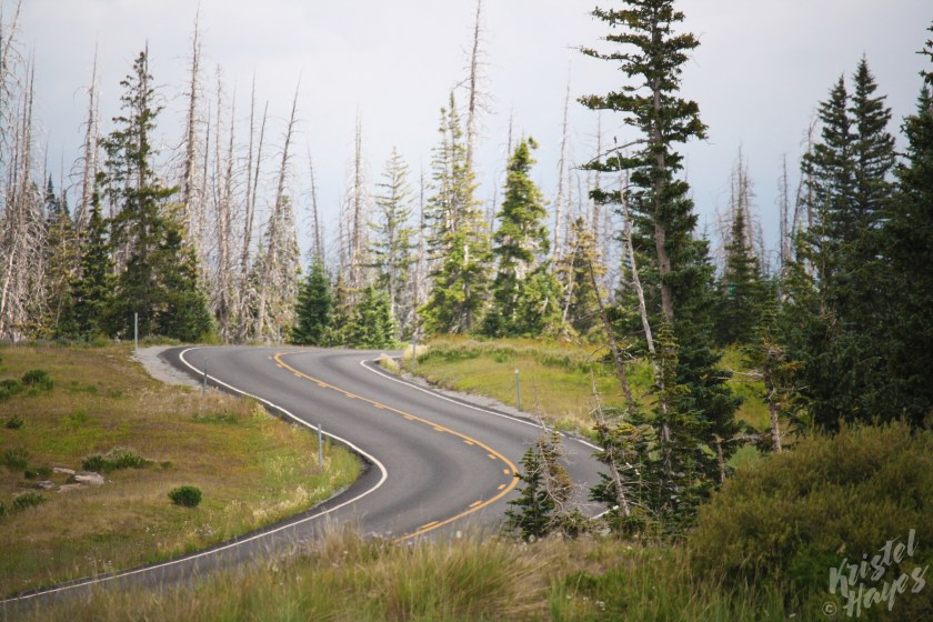 Road into Cedar Breaks National Monument