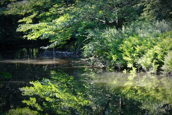 Peaceful Stroudwater River