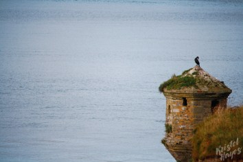 Charles Fort Lookout Tower-Kinsale, Ireland