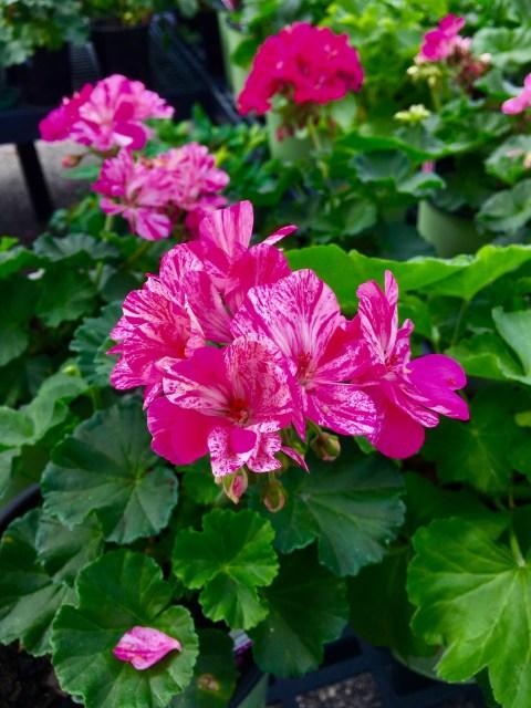 flower3-1