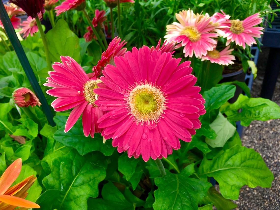 flower4-1