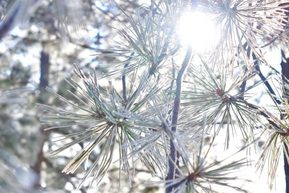 Sun_Frost