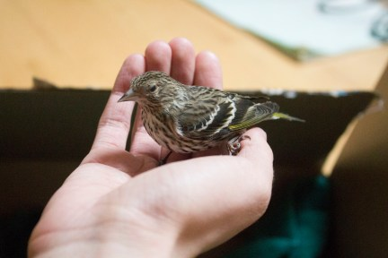 Baby Bird in Hand