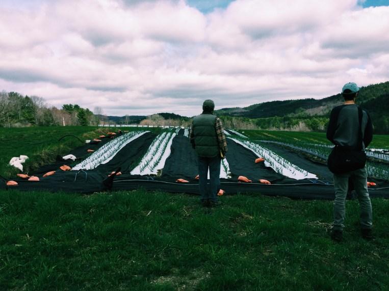 High Meadow Farm