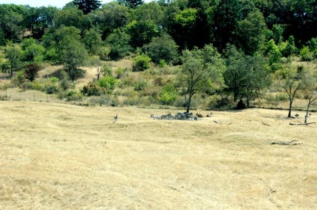 wildlife safari  14