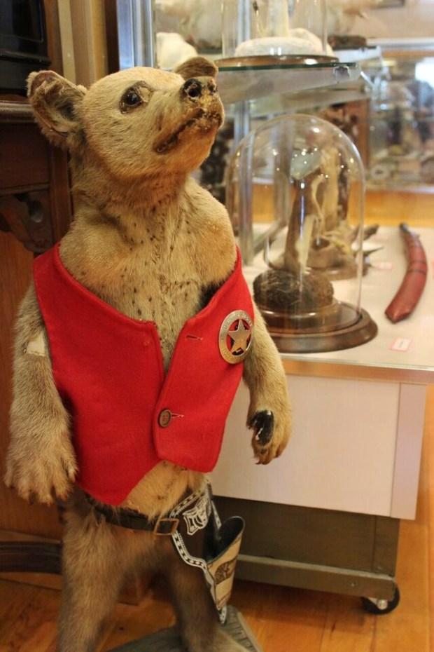 Hutson Museum Bear Cub
