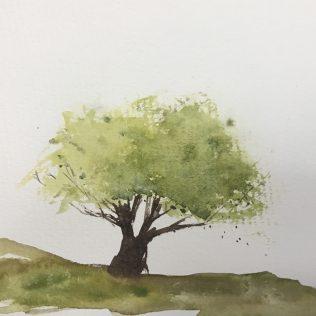 A summer english oak.