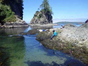 Collecting benthic intertidal community data