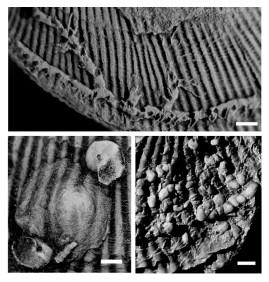 Encrusting organisms. Fig. 6 (Barclay et al. 2015b)