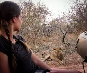 Wildlife TV Presenter with wild lion in Africa