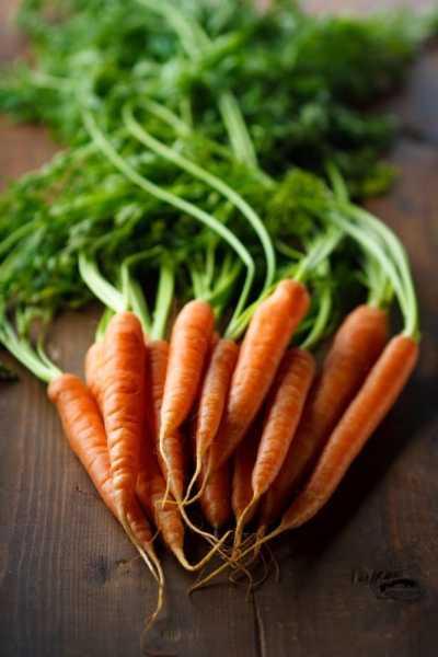 Gesunde und frische Nahrung, bessere Welt, gesunde Umwelt