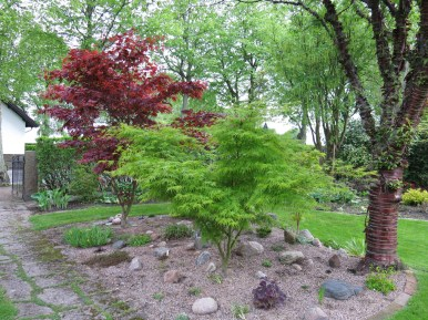 Trädgård 14 maj 3