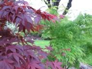 Trädgård 14 maj 5