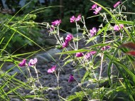28 juni 15 lila näva trädhörnet 2