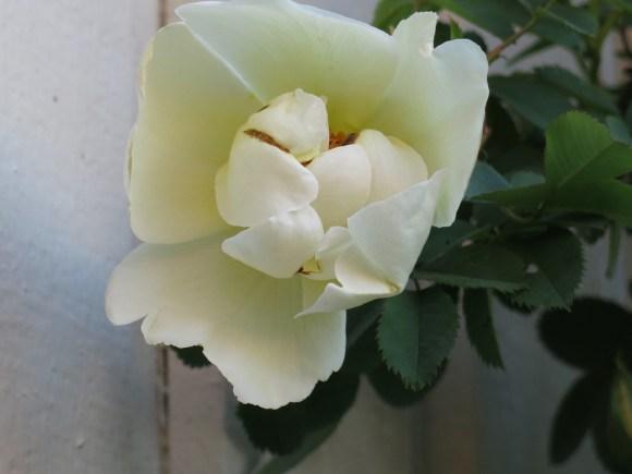 24 maj 16 ros Aïcha