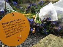30 juli 15 Kew rock garden 12