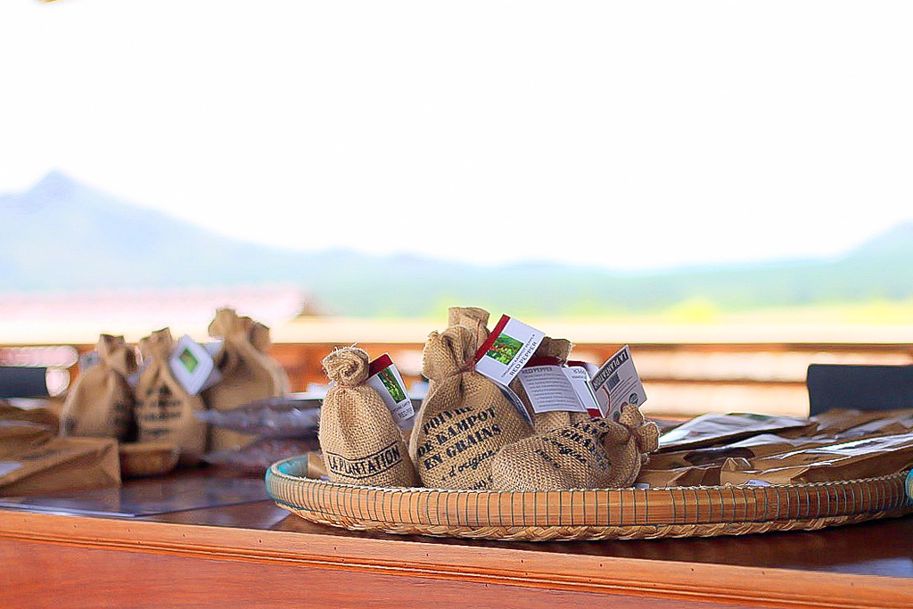 Cambodia Travel Tips. Kampot Pepper Farm