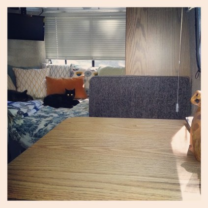 Our cats, Lei Lei and Han, relaxing inside our RV.