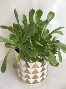 gold triangle planter