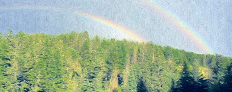 Mountain healer rainbows