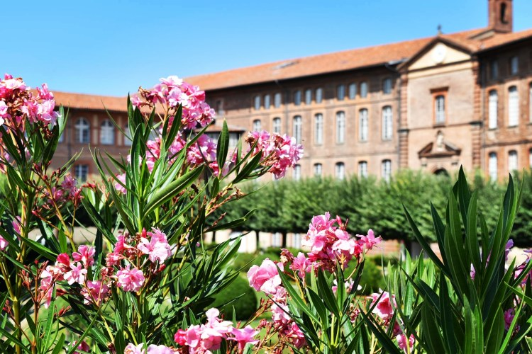 Blomster Toulouse