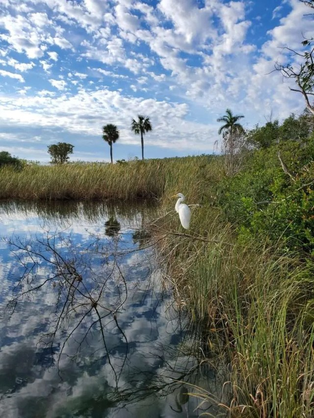 Birdwatching, Everglades National Park