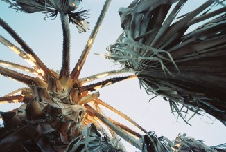 Life & Death of a Palm Tree