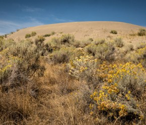 grasslands-farwell-canyon-dune-and-sagebrush-by-kristin-noack