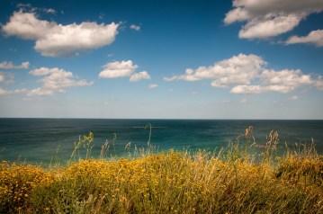 wildflowers ocean sky