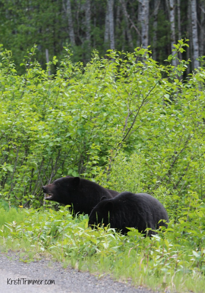 5-31-14 Black Bears - Head Up