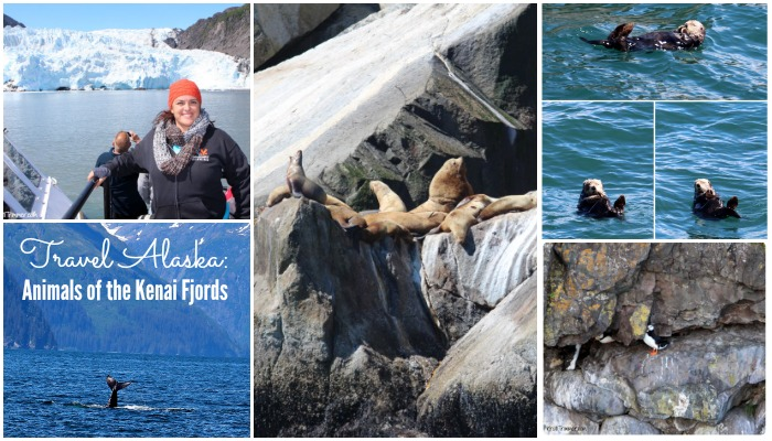 Travel Alaska: Animals of the Kenai Fjords