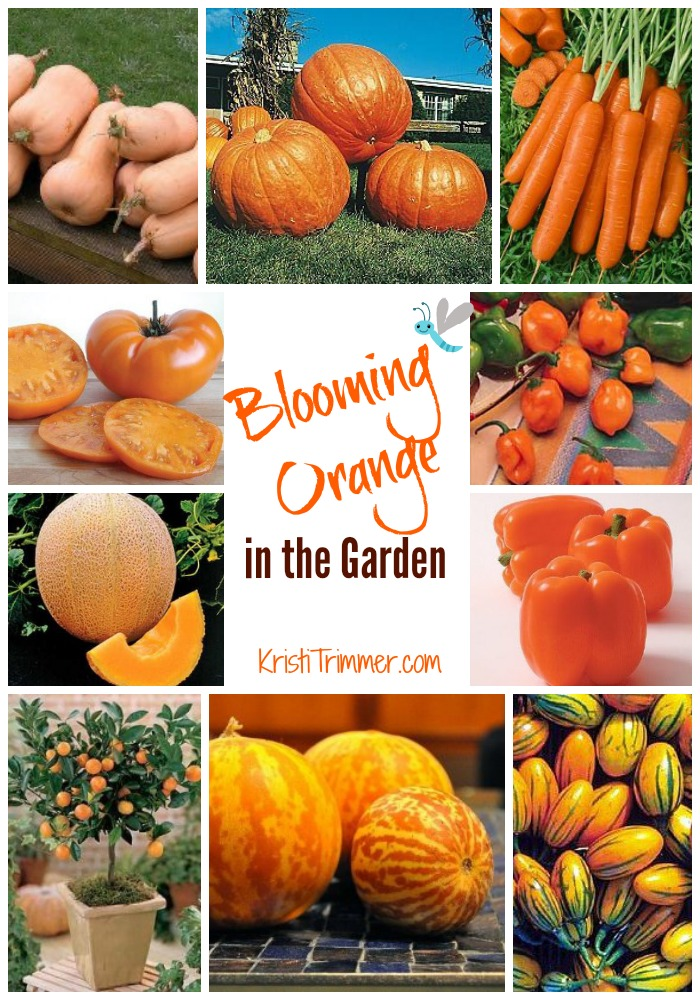 Blooming Orange - KT