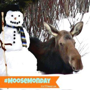 Moose in Snow Edited