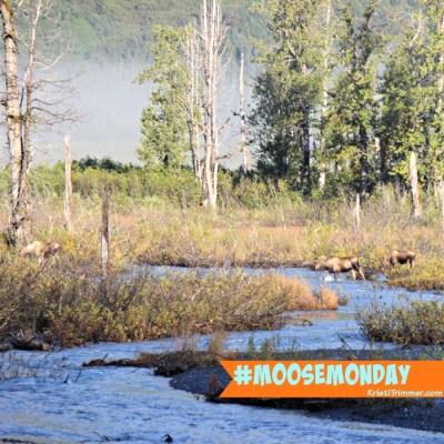 Moose Monday – Wait Up Mom