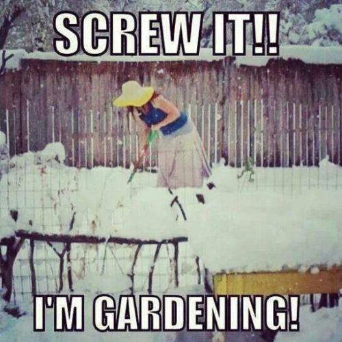 Gardening in Snow Meme