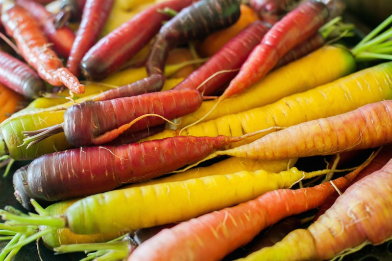 Growing Carrots from Seeds #carrots #gardening #gardeningtips
