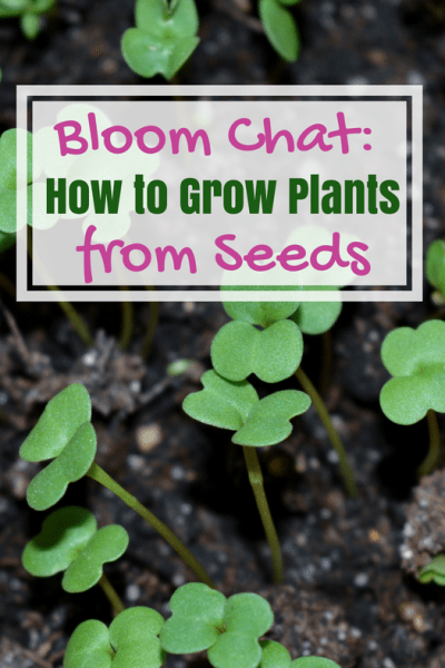 How to grow plants from seed step by step guide