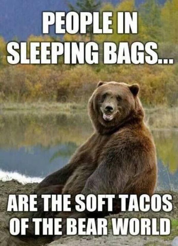 Bear Camping Memes