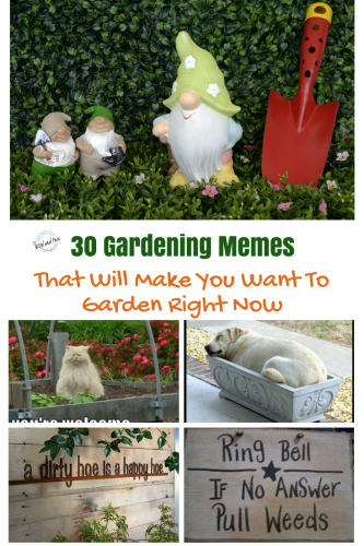 Garden Memes That Will Make You Want To Garden Right Now PT