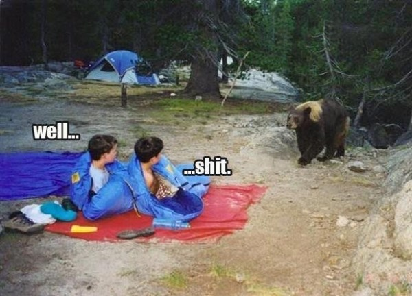 Bear Camping Meme #bears #bearaware #camping #meme #ohshit