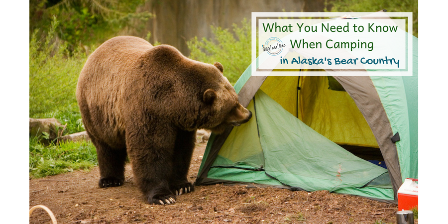 Camping in Bear Country #camping #bears #bearsafety #campingtips #alaska