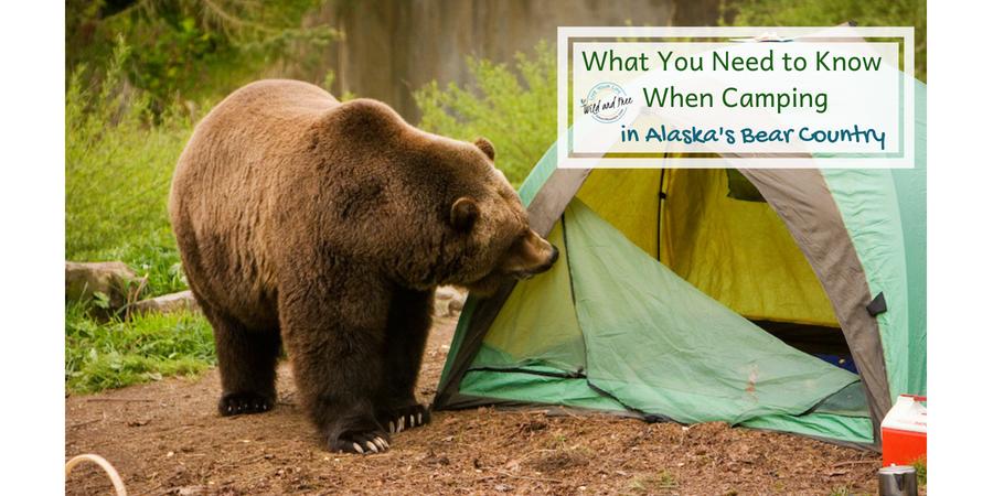 Camping in Bear Country #camping #bears #bearsafety #campingtips #alaska
