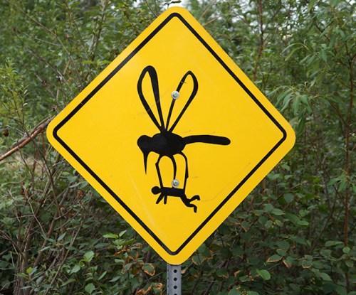 Alaska Mosquito Sign #alaska #mosquito #alaskastatebird