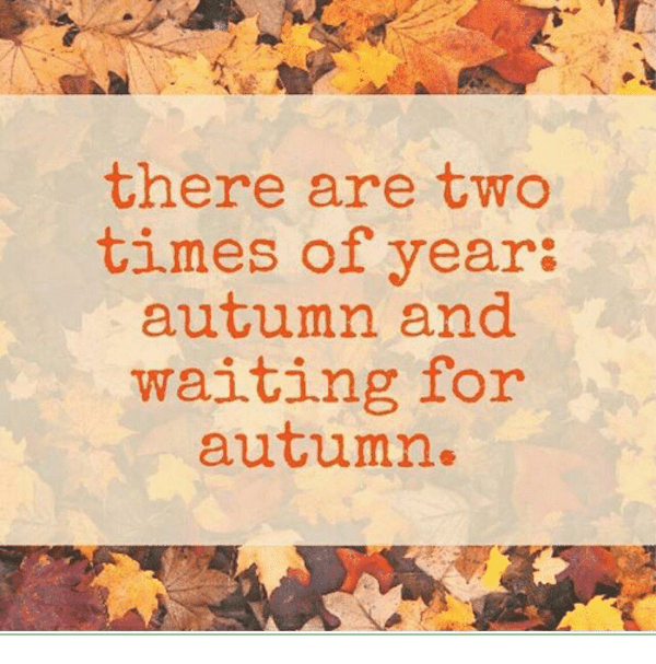 Autumn is here! The wait is over. #fall #autumn #fallmemes